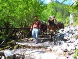 Mulis tragen die Vorräte zur Berghütte auf 2100 m