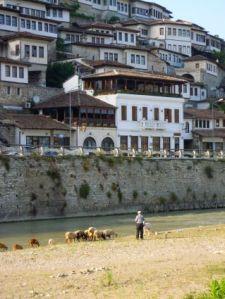 Schafhirte am Osum-Ufer
