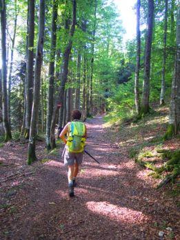 Durch den Wald auf die Alm